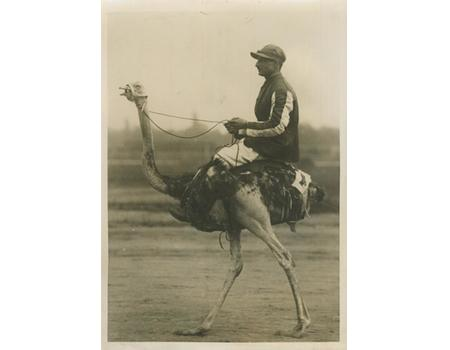 OSTRICH RACING IN PRAGUE 1920S PRESS PHOTOGRAPH